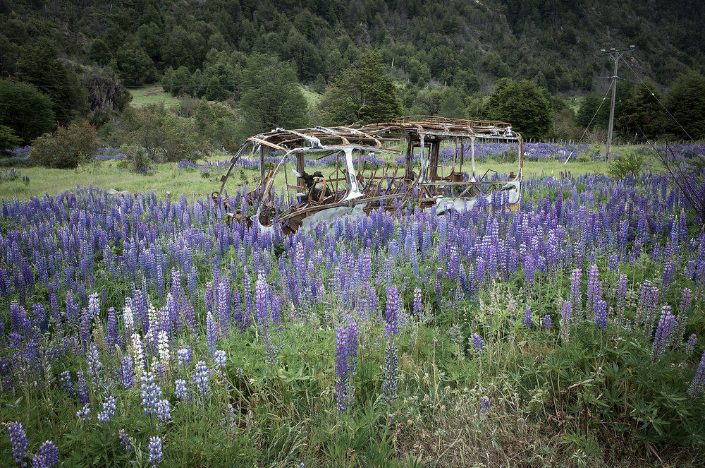 The skeleton of a burned bus is overcome by wild lupines along the roadside in Río Simpson National Park, Chile.
