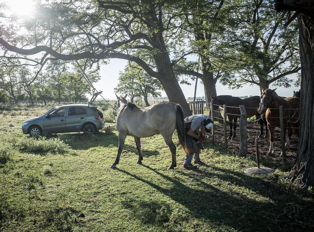 A farrier replaces shoes on a gelding a La Estancia Margarita near Tapalqué, Argentina.