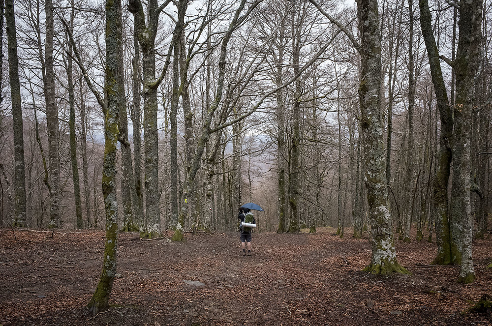 A pilgrim in the forested descent into Ronscevalles.