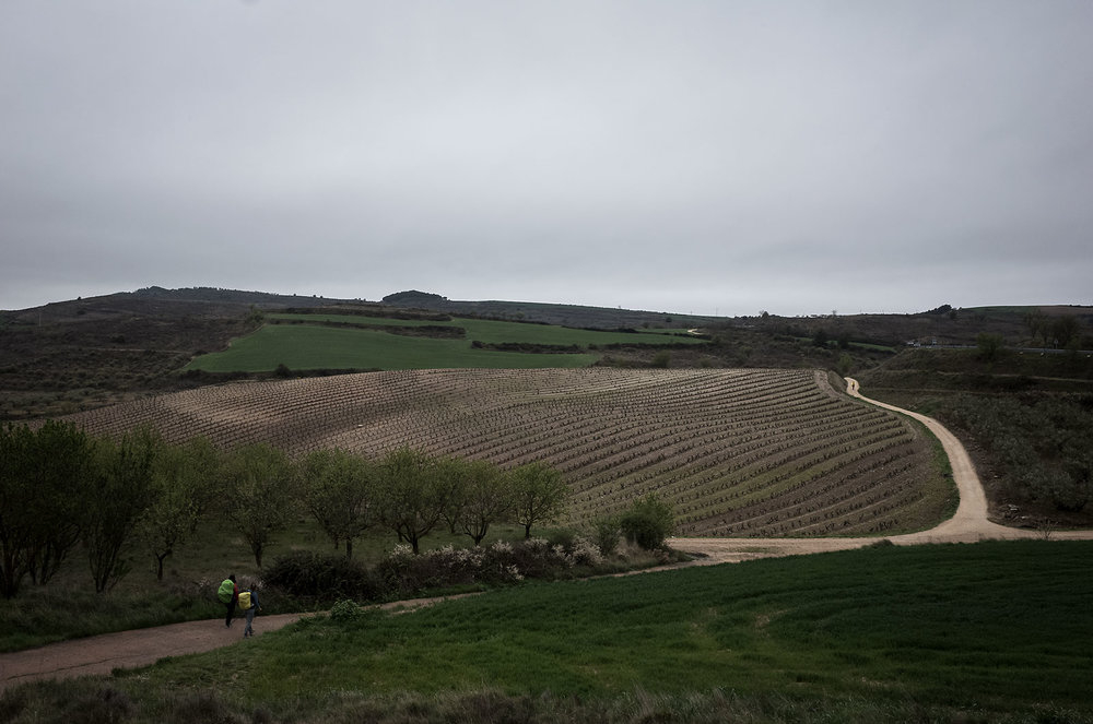 Pilgrims passing through vineyards in the Rioja region.