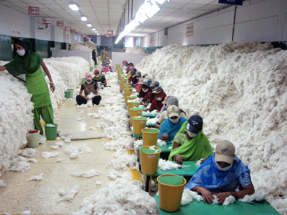 Workers manually decontaminating cotton before processing at an Indian spinning mill.