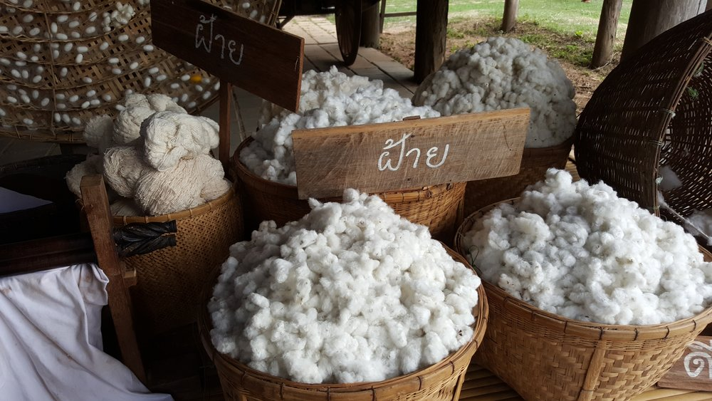 Unprocessed cotton bolls at market