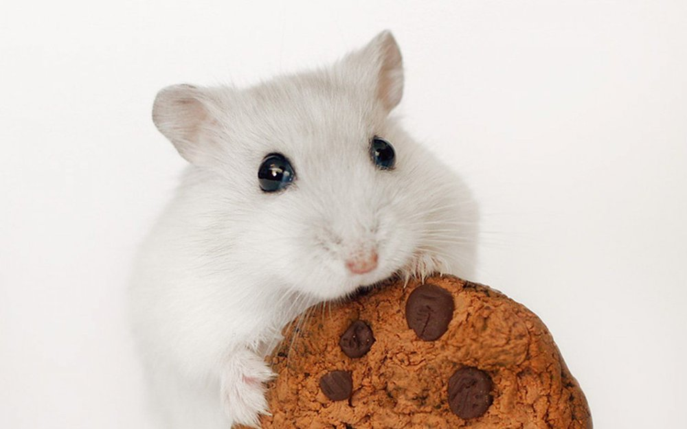 The only thing that makes us happier than this mouse eating a cookie is cruelty-free brands