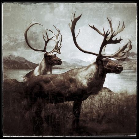 Harri Heinonen sarjasta Fauna