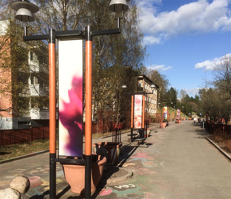 OikokatuKevät2017.jpg