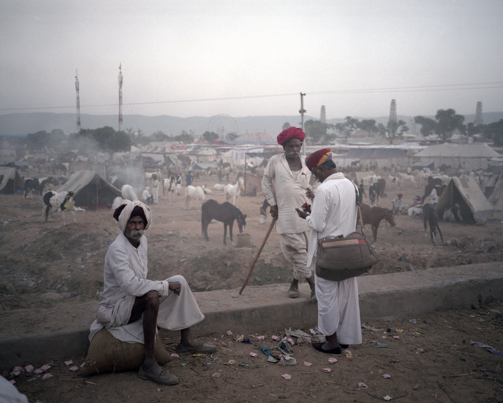 The Villagers, Pushkar 2016
