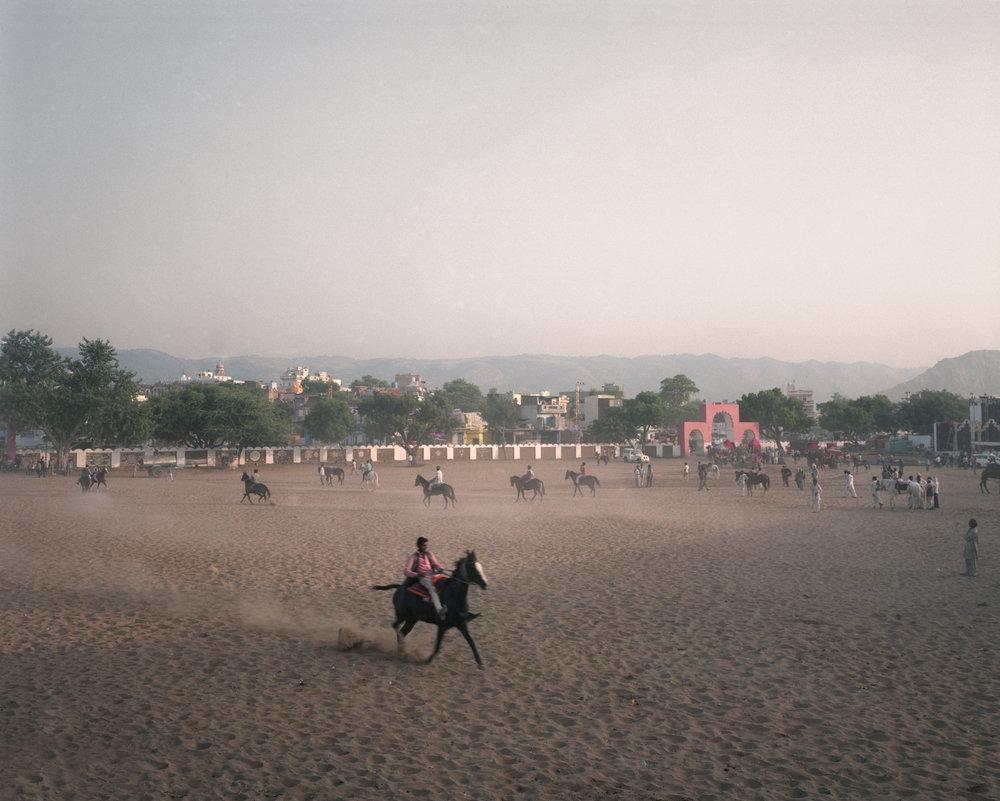 The Show Horse, Pushkar 2016