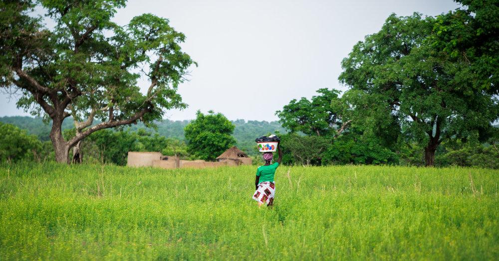 Akuafo Farms-Ghana