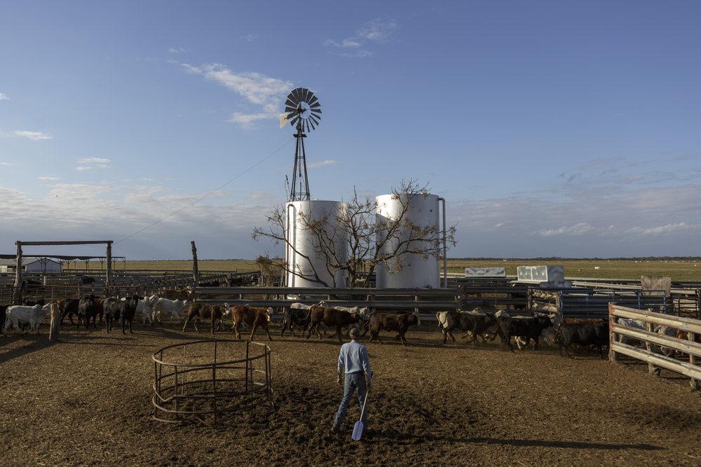 Ryan stares at cattle as they pass through the holding pen and return to the ranch's prairie land. Unlike his father, Ryan has spent almost his entire life on the ranch. His life and memories lie between each blade of grass, each hoof print in the ground.