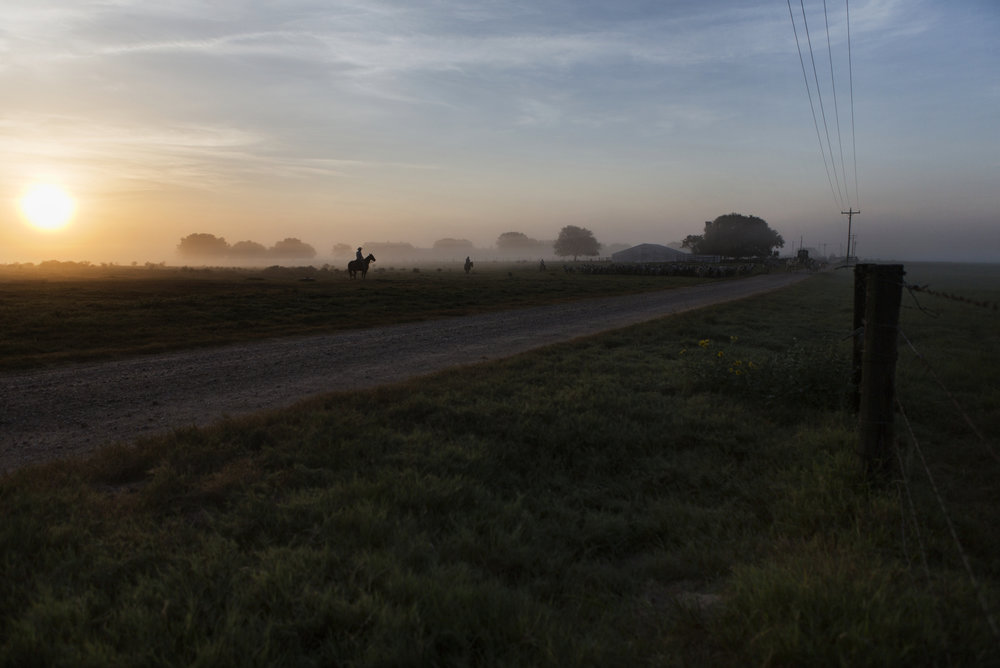 Frank, the Head Rancher of the Kaechele Ranch, and his son, Ryan, scale through the fields of the Texas prairie each morning as the sun rises above the horizon.  The Kaechele Ranch was founded in 1899 by the grandfather of Frank's wife, Bonnie. The 13,000-acre ranch in southeast Texas is located along the San Bernard River, where the Austin, Colorado and Wharton County lines meet.