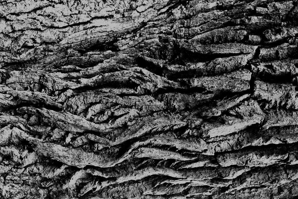 Tall as an Oak Tree_001.JPG