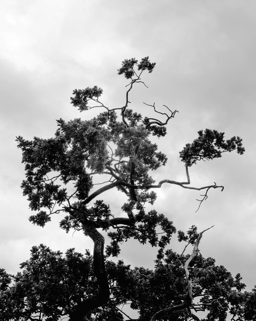 Tall as an Oak Tree_006.JPG