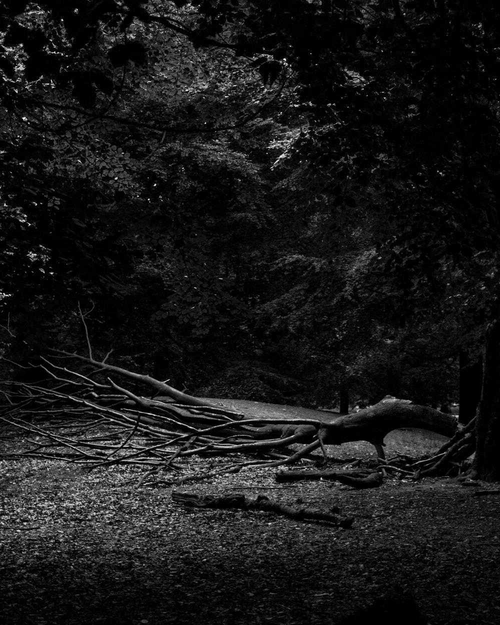 Tall as an Oak Tree_017.JPG