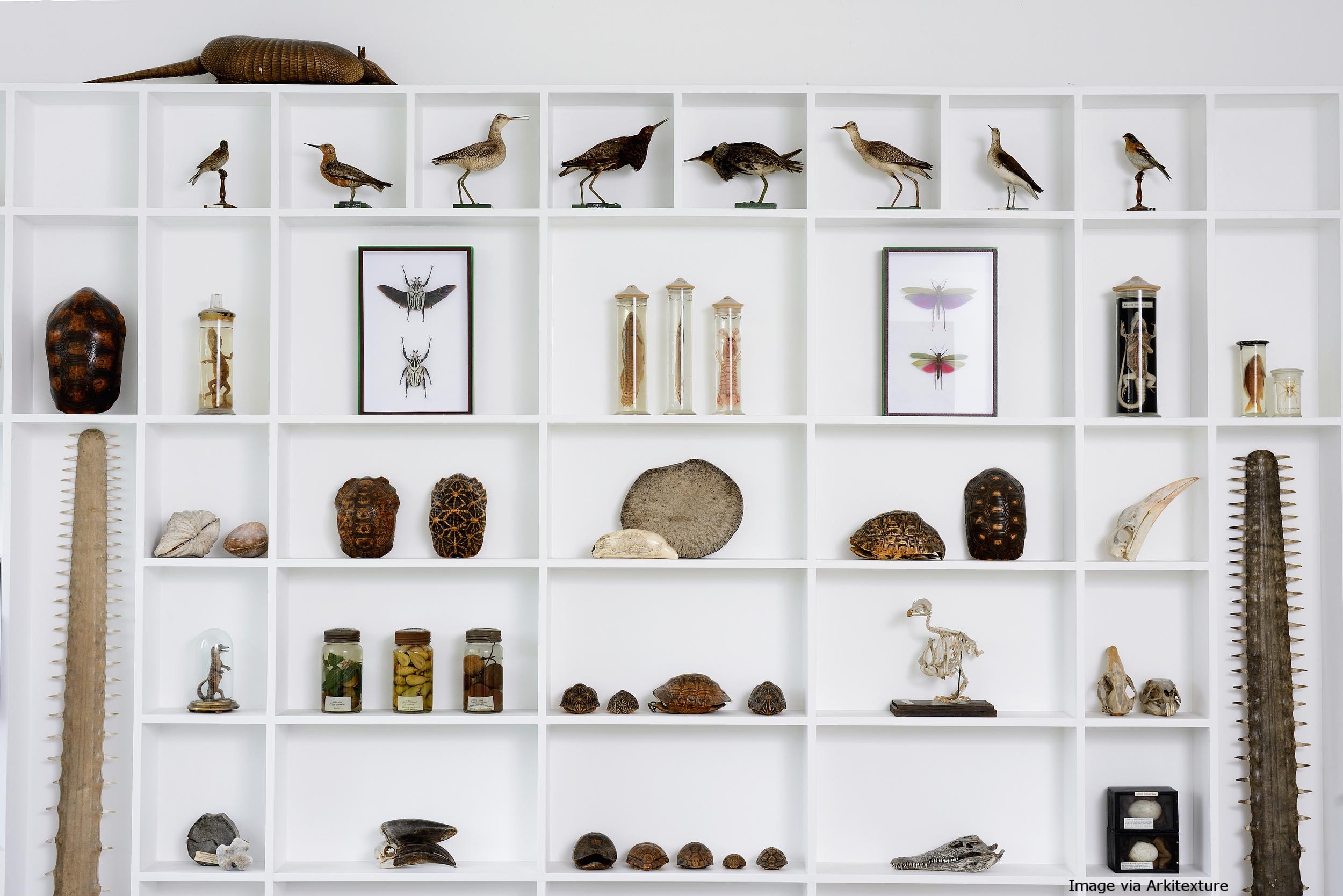 Cabinet Of Curiosities Calico Blog