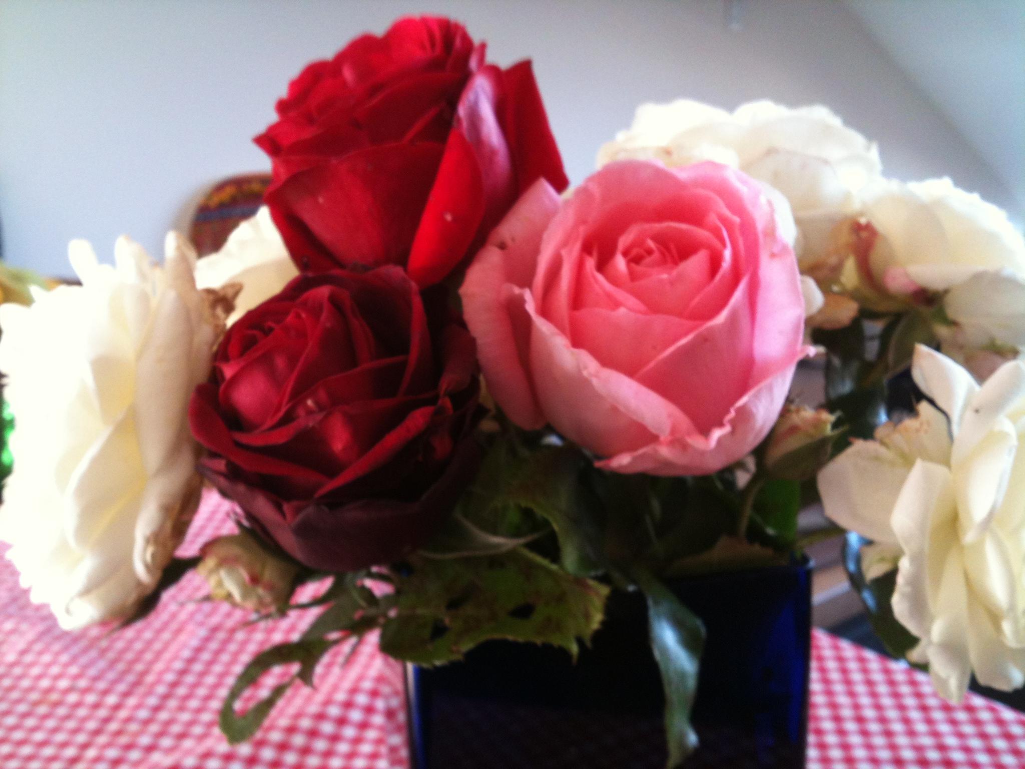 Roses representing appreciation