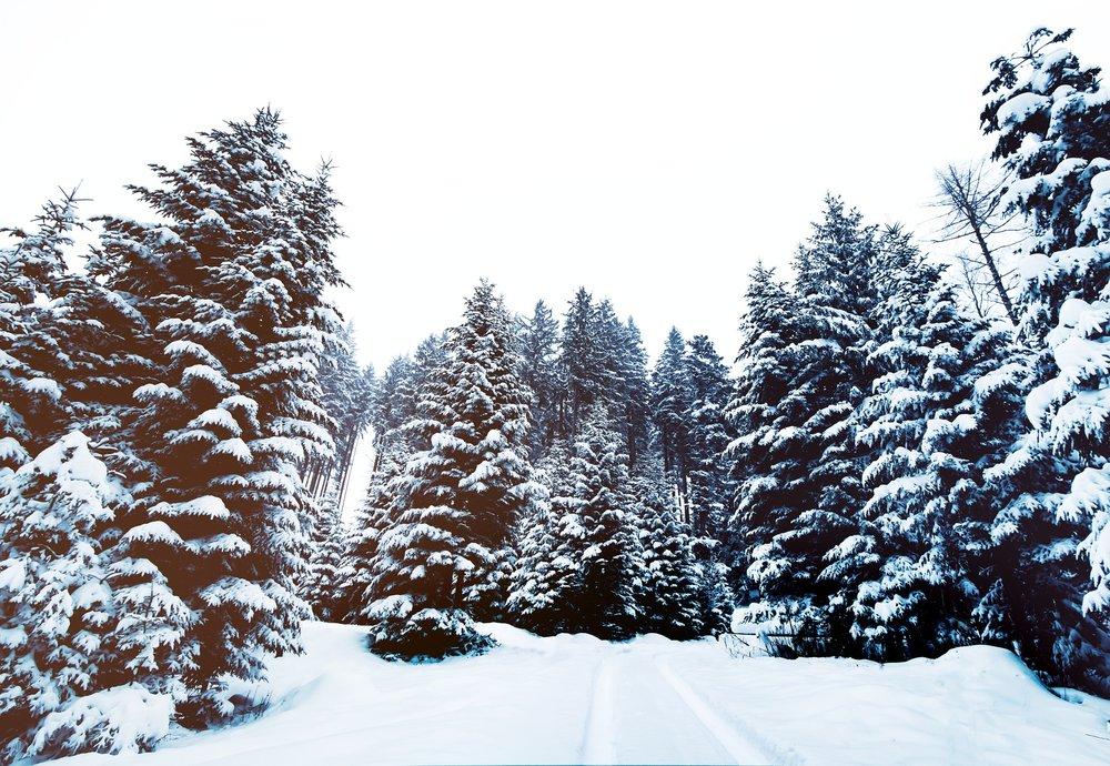 snow-1209987_1920.jpg