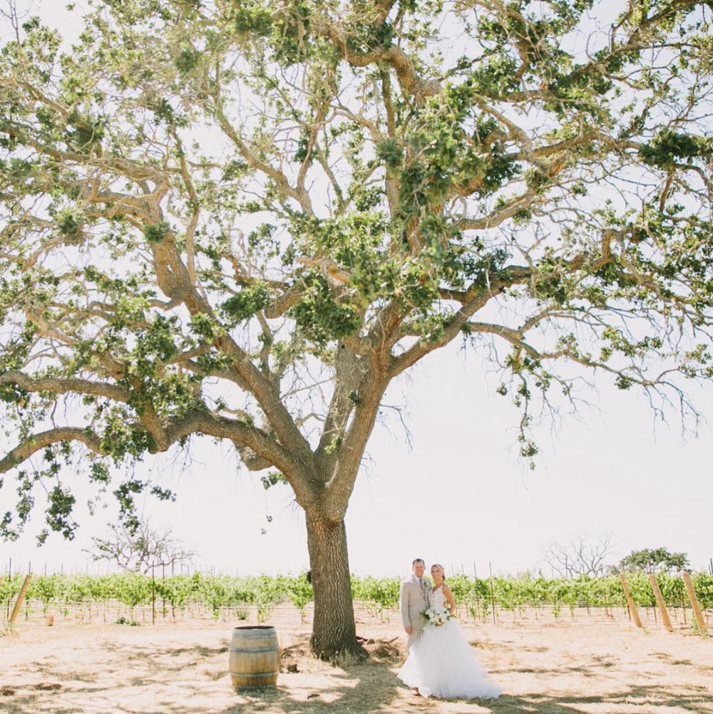 Gainey Vineyard Wedding, Santa Ynez Valley  I  Photo  by Fondly Forever I   Ruffled Blog