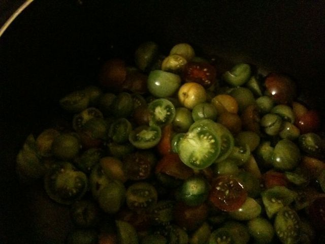 green tomatoes awaiting their fate
