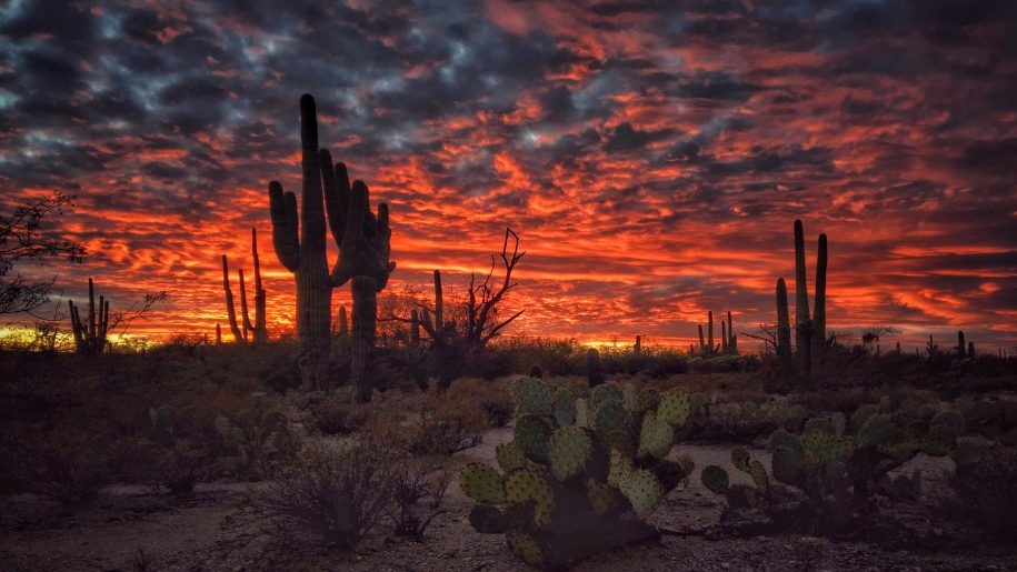 Tucson-Arizona-sunset-flaming-sky-desert-landscape-with-Cactus-Desktop-HD-Wallpapers-for-mobile-phones-and-computer-3840x2400-915x515.jpg