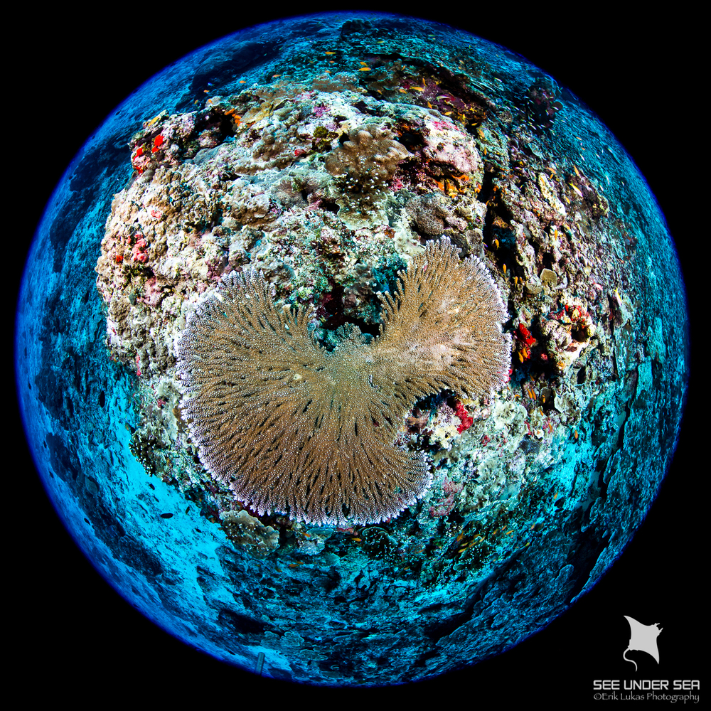 Hard Coral, Narcandom Island, Andaman Sea, India