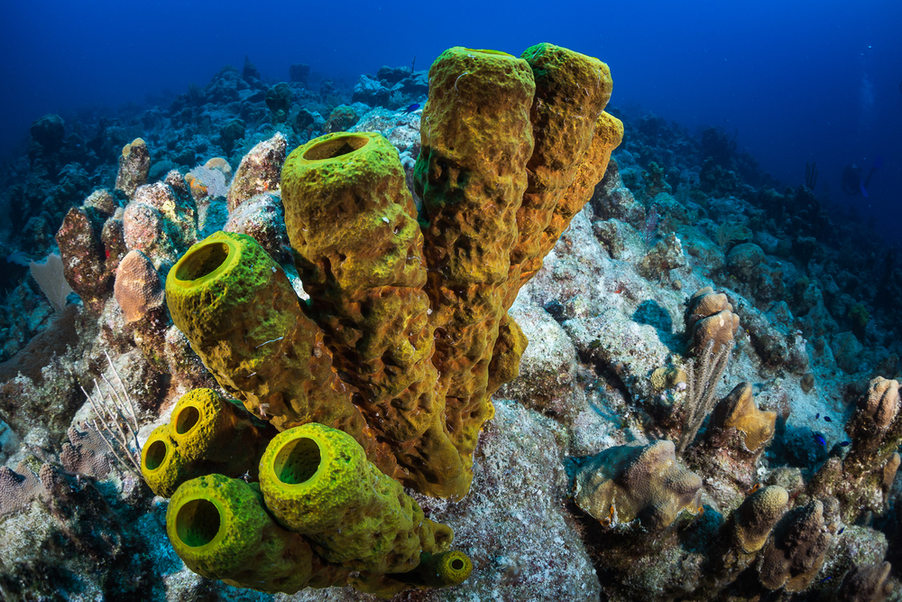 Barrel Sponges, Turks & Caicos Islands