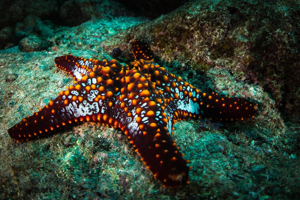 Starfish, La Paz, Mexico