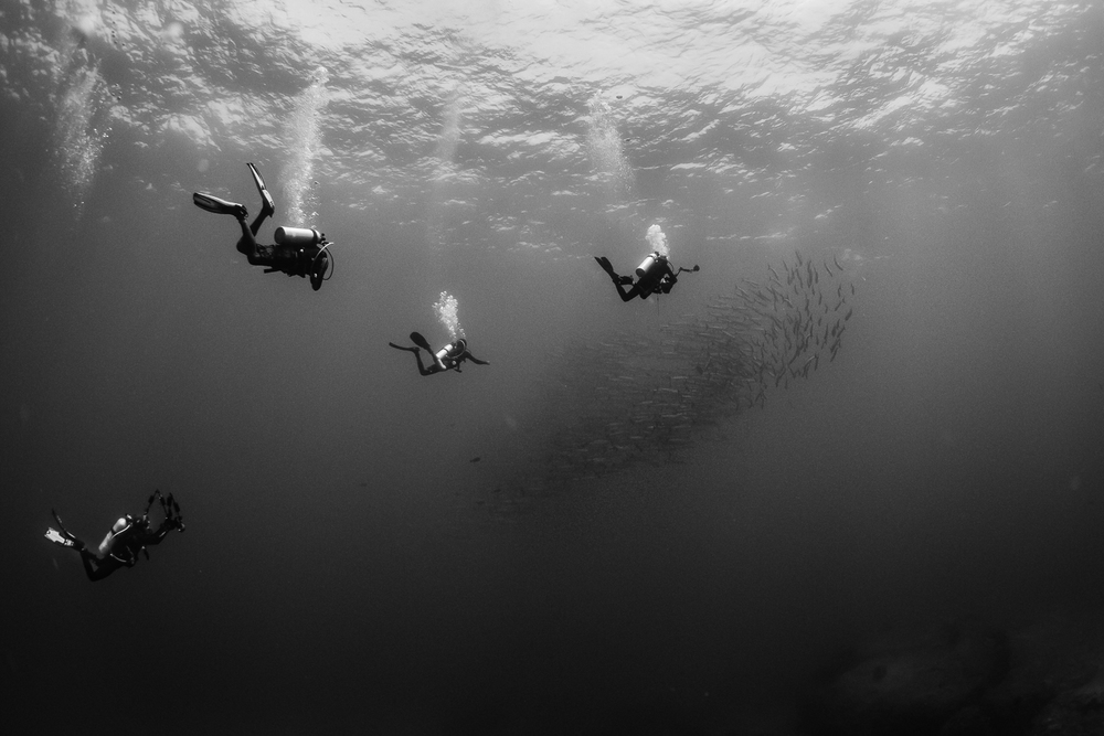 Divers and Barracuda, Barren Island, Andaman Sea, India