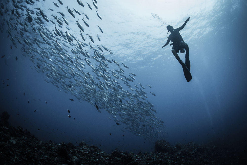 Diver with Schooling Jacks, Barren Island, Andaman Sea, India
