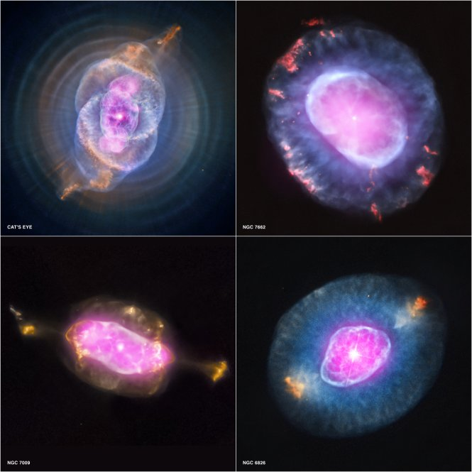 This gallery shows four planetary nebulas from the first systematic survey of such objects in the solar neighborhood made with NASA's Chandra X-ray Observatory. The planetary nebulas shown here are NGC 6543, also known as the Cat's Eye, NGC 7662, NGC 7009 and NGC 6826. In each case, X-ray emission from Chandra is colored purple and optical emission from the Hubble Space Telescope is colored red, green and blue.  Image credit: X-ray: NASA/CXC/RIT/J.Kastner et al.; Optical: NASA/STScI