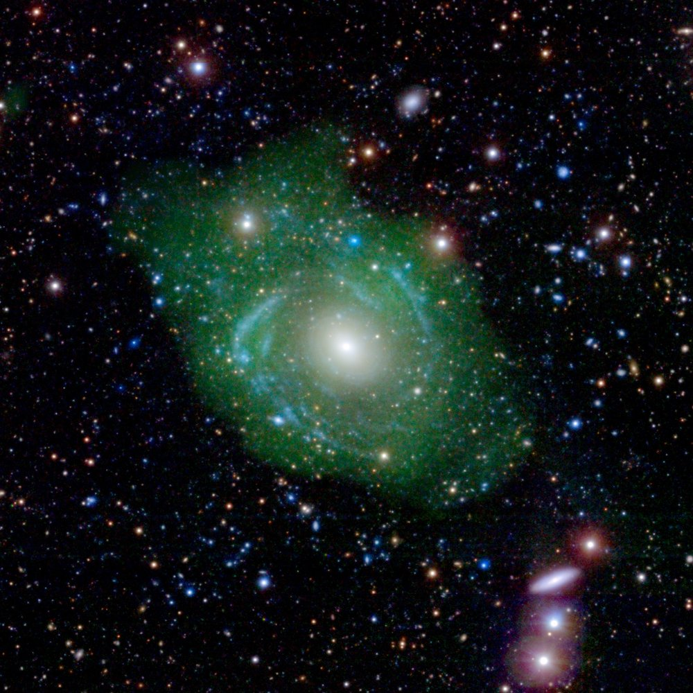 UGC 1382 appeared to be a simple elliptical galaxy, based on optical data from the Sloan Digital Sky Survey (SDSS). But spiral arms emerged when astronomers incorporated ultraviolet data from the Galaxy Evolution Explorer (GALEX). Combining that with a view of low-density hydrogen gas (shown in green), detected at radio wavelengths by the Very Large Array, scientists discovered that UGC 1382 is a giant. Image credit: NASA/JPL/Caltech/SDSS/NRAO