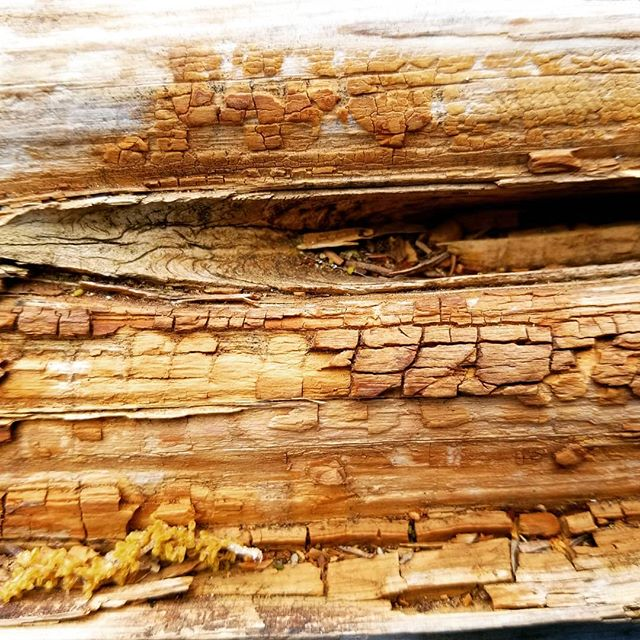 Pretty lines in this piece of wood fencing.