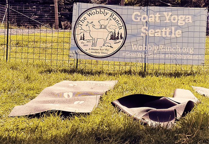 Our outside goat yoga studio at  Wobbly Ranch  in Snohomish, WA