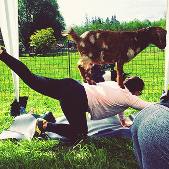 1:1 Goat Yoga coaching is part of the experience.
