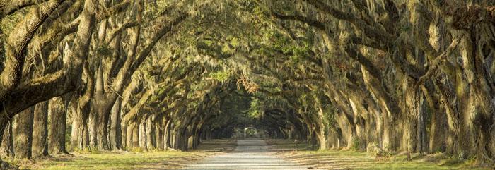 Savannah, Georgia provides the backdrop to Mashama Bailey's story