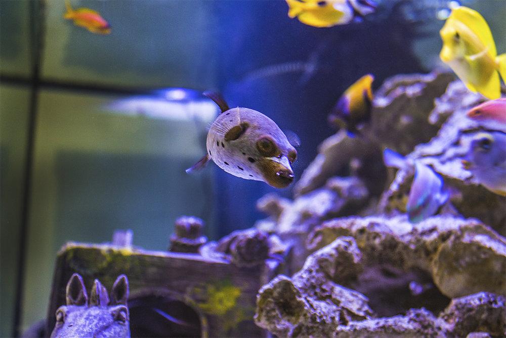 HBDC Dog Fish.jpg