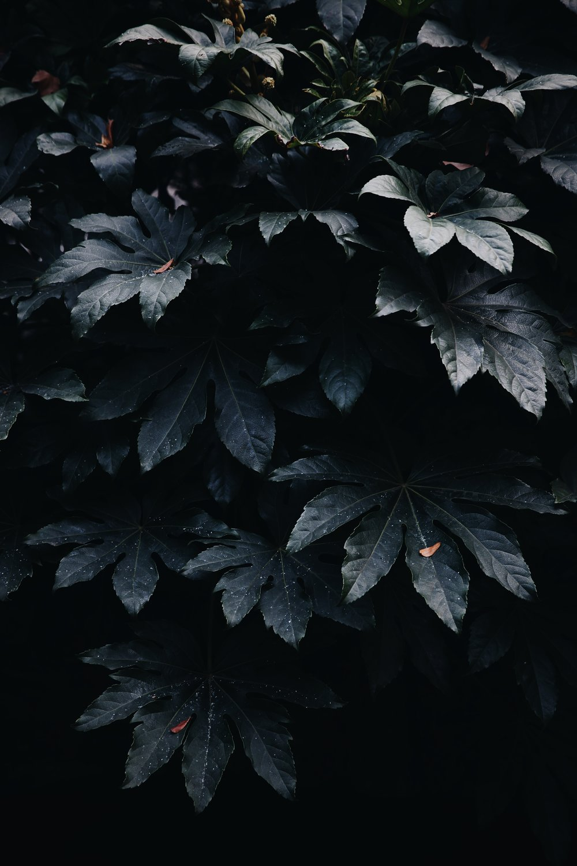 Shanghai Leaf