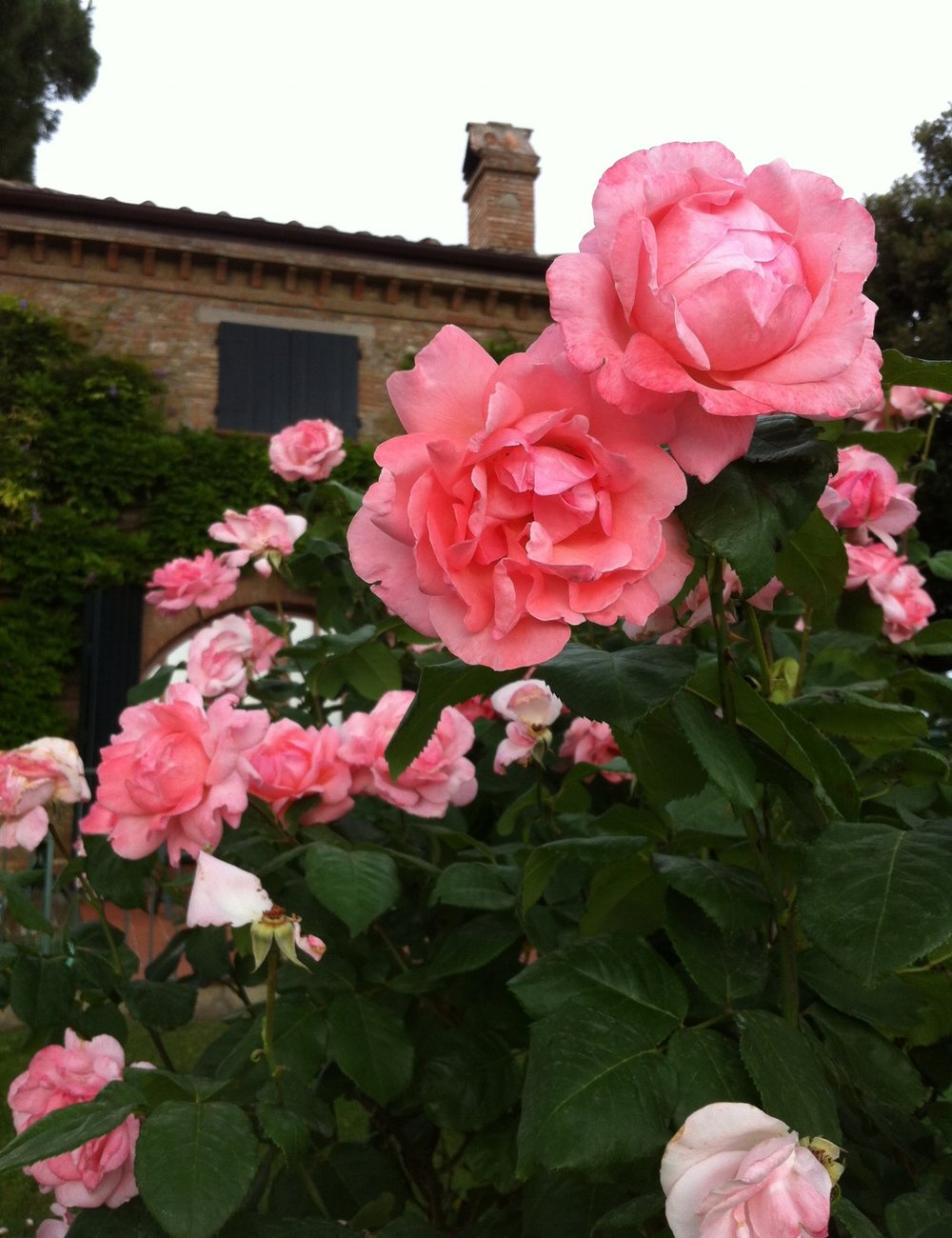 roses-and-roofline-umbria.jpg