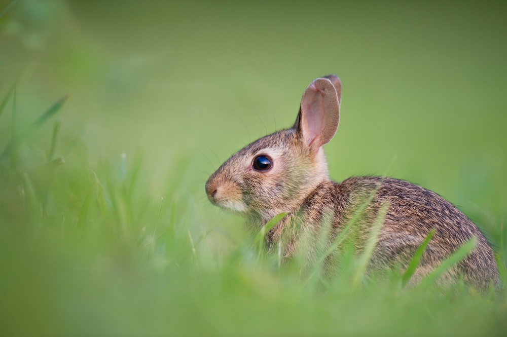 beauty-around-us-bunny.jpg