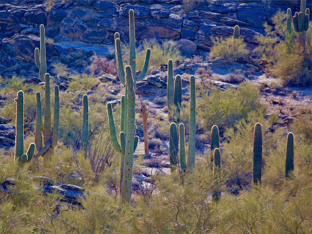 desert-cactus.jpg