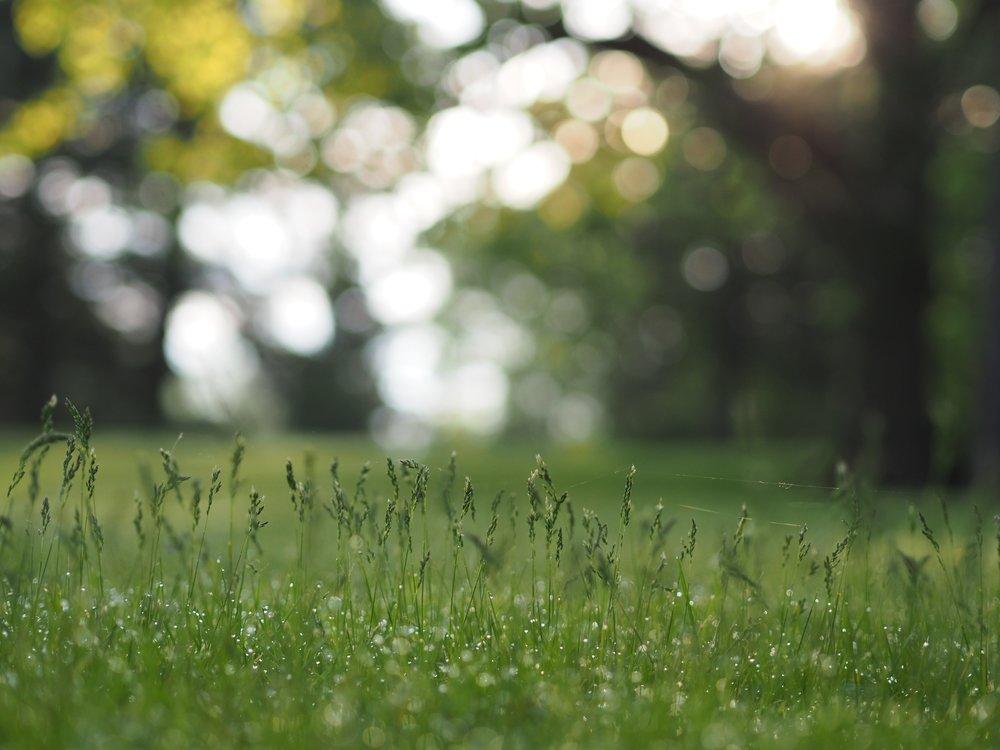 tall-grass.jpg