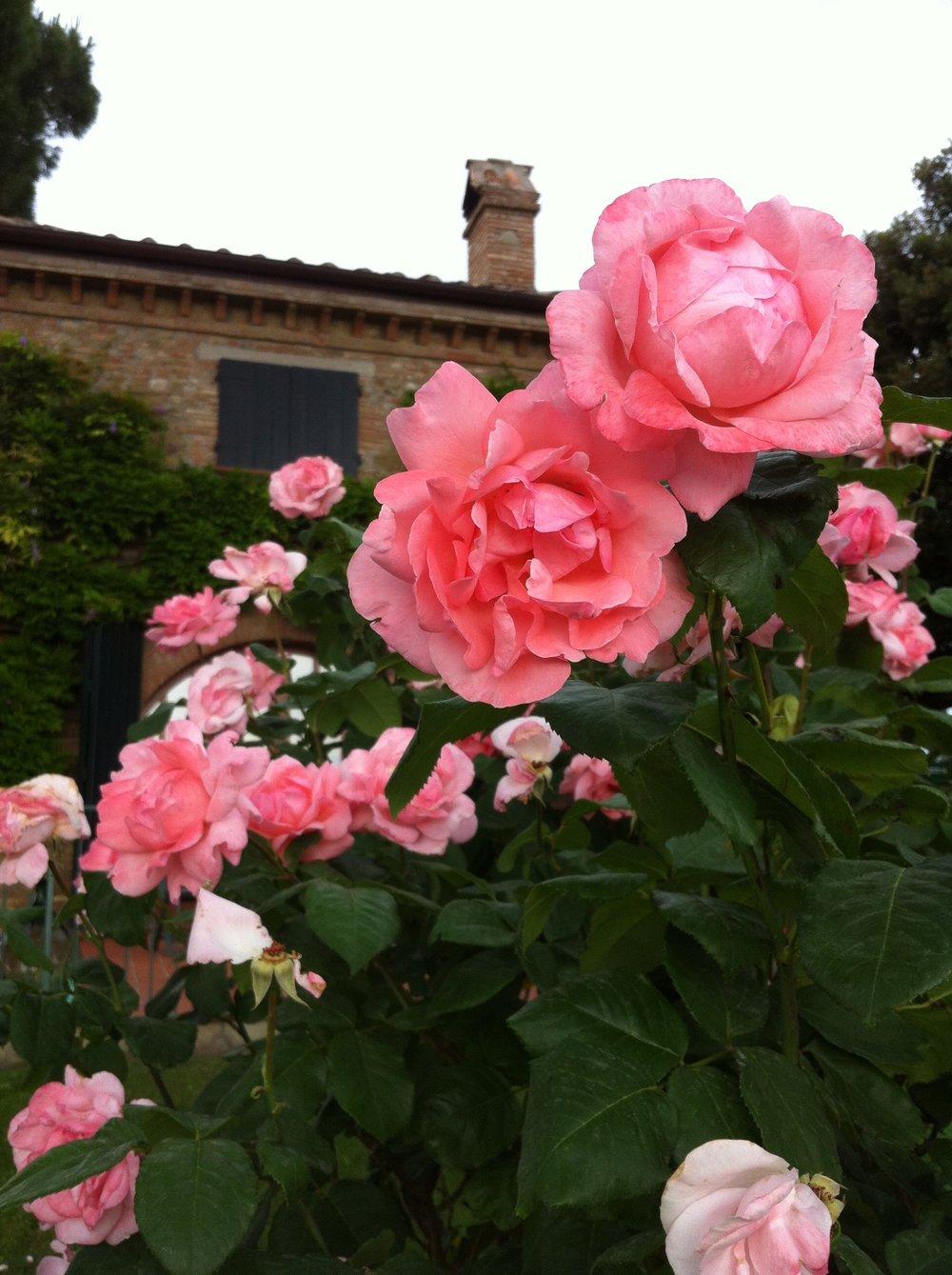 pink-rose-villa-behind.jpg