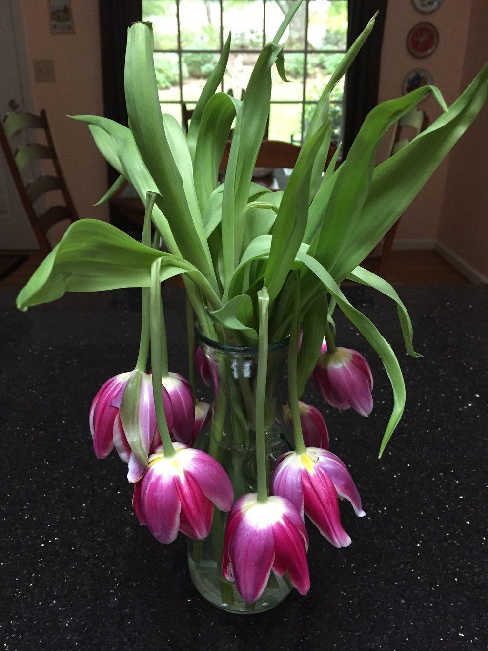 sagging-tulips.jpg