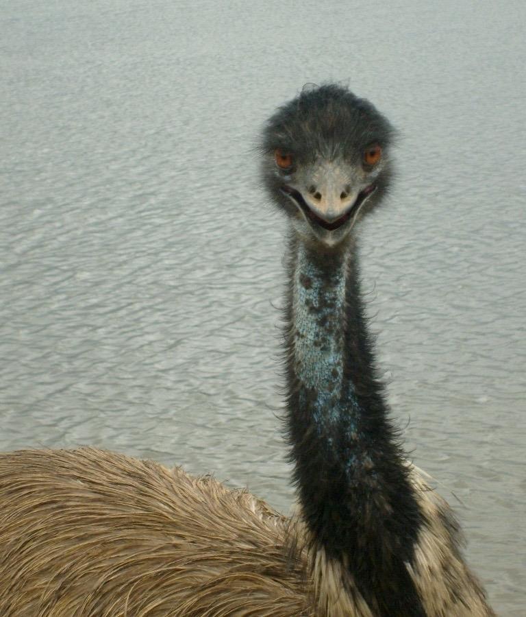 emu-lake.jpg