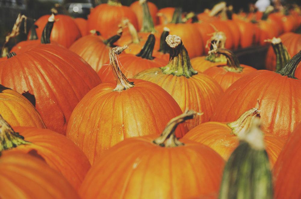 pumpkin-farm-visit.jpg