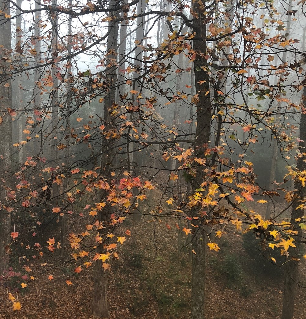 yellow-leaves-fog.jpg