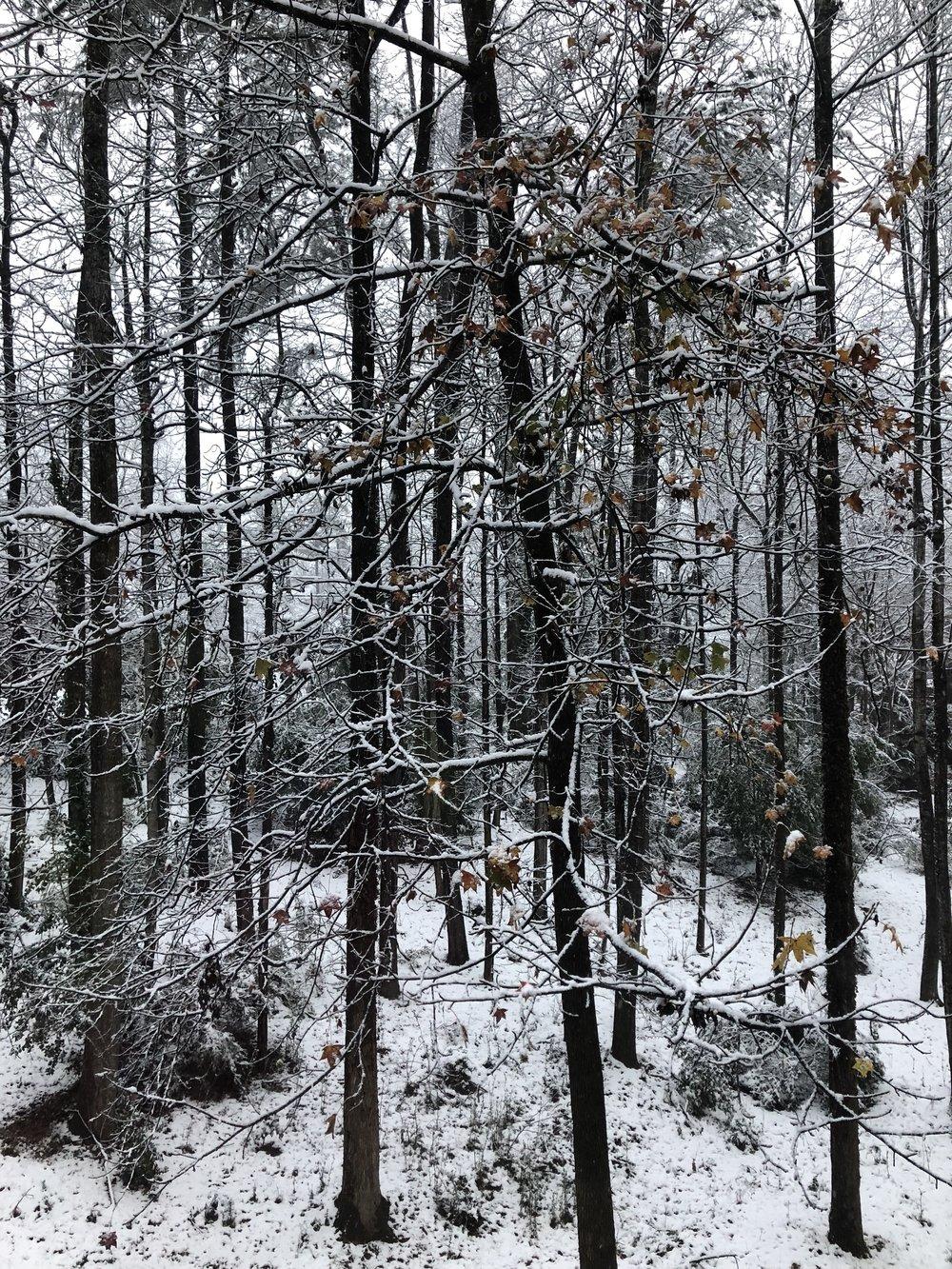 trees-leaves-snow.jpeg