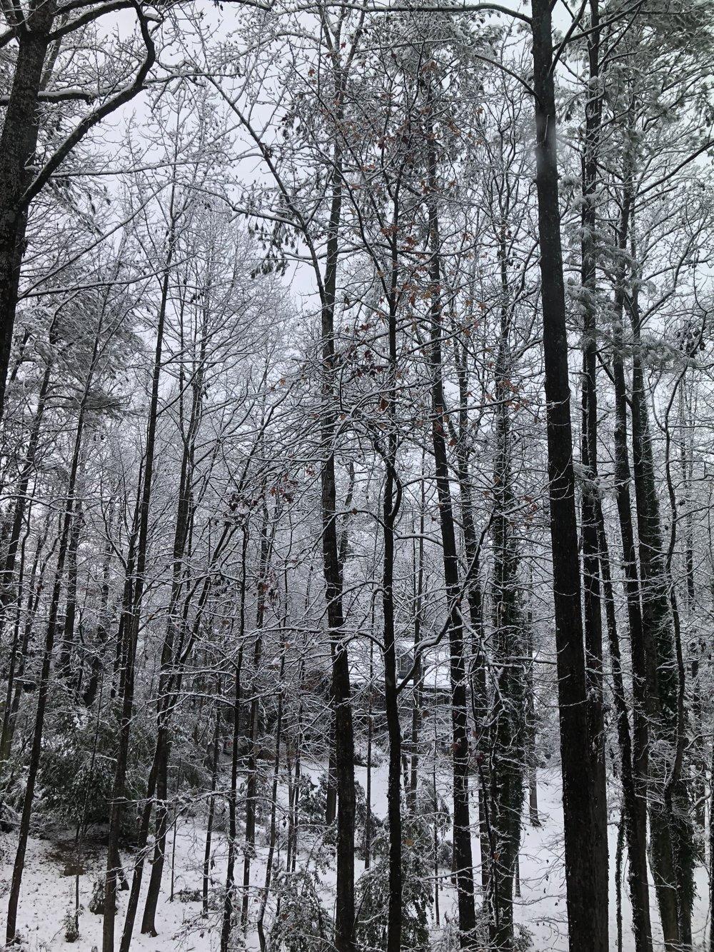 trees-silhouette-snow.jpeg