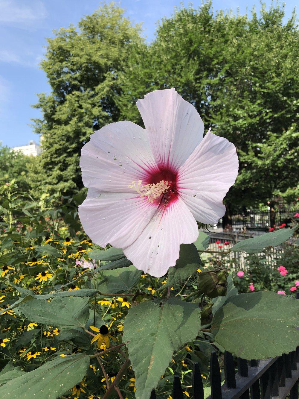 Glimsen-NYC-pink-flower.jpg
