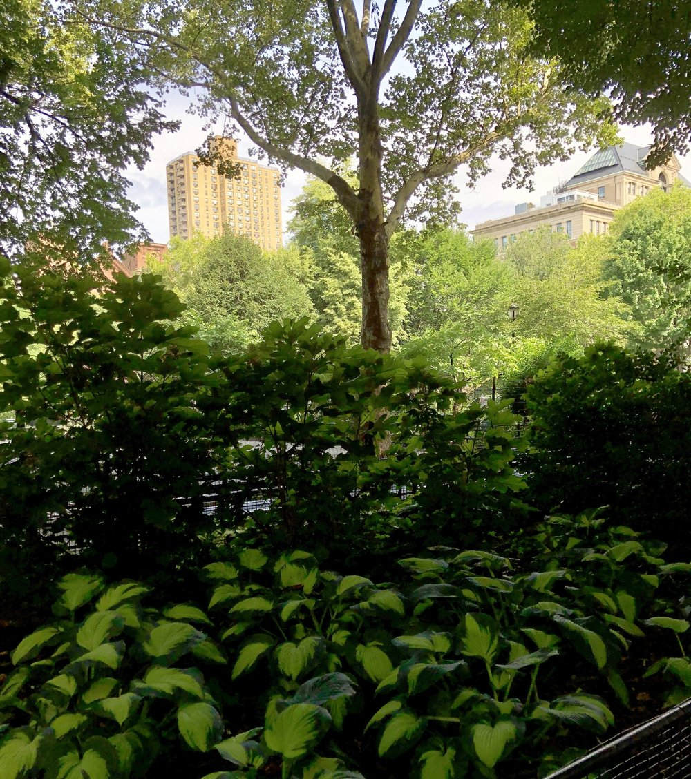 Glimsen-NYC-hostas-building.jpg