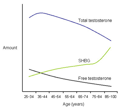 With age, men produce less testosterone and more sex hormone binding globulin [SHBG]. The result is a smaller and smaller amount of free testosterone, which is the biologically active form. Image adapted from nebido.com